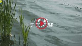 Overzicht videoreportages - De Wijers - Het Heidestrand