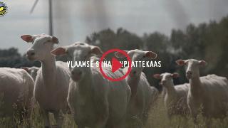Overzicht videoreportages - Vlaamse schapenplattekaas